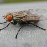 Jasa Pembasmi Lalat Profesional di Jakarta