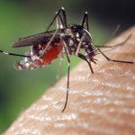 Mengenal Lebih jauh Siklus Hidup Nyamuk