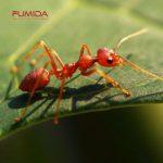 4 Cara Mudah Mengusir Semut dari Rumah Anda