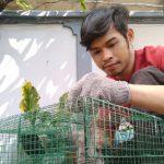4 cara Ampuh Mengusir Tikus Secara Alami