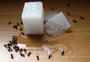 Mengapa Semut Dianggap Sebagai Hama