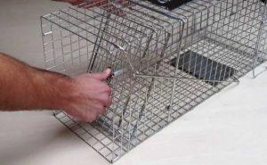 Tips Memakai Perangkap Tikus Agar Efektif