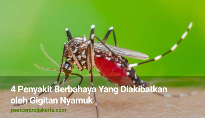4 Penyakit Berbahaya Yang Diakibatkan oleh Gigitan Nyamuk