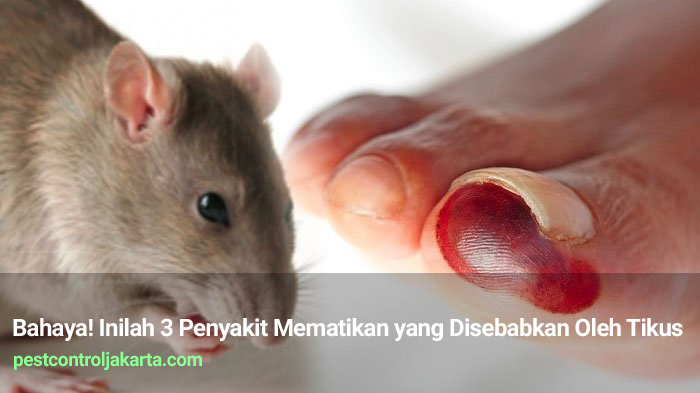 Bahaya! Inilah 3 Penyakit Mematikan yang Disebabkan Oleh Tikus