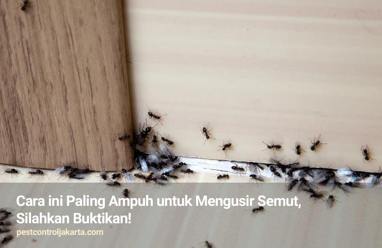 Cara ini Paling Ampuh untuk Mengusir Semut, Silahkan Buktikan!