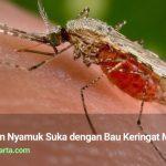 Inilah Alasan Nyamuk Suka dengan Bau Keringat Manusia