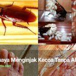Inilah Bahaya Menginjak Kecoa Tanpa Alas Kaki