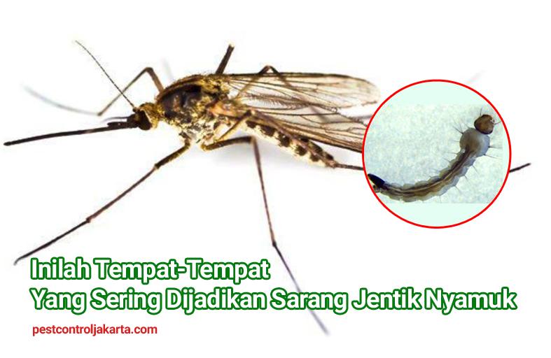 Inilah Tempat-Tempat Yang Sering Dijadikan Sarang Jentik Nyamuk