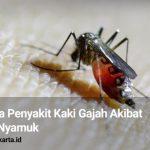Waspada Penyakit Kaki Gajah Akibat Gigitan Nyamuk
