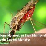 Mengerikan! Nyamuk ini Bisa Membuat Tubuh Anda Seperti Monster