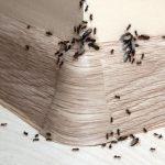 5 Bahan Dapur Alami Pengusir Semut