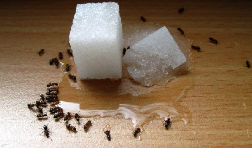 Alat Membasmi Hama Serangga Di Lingkungan Rumah