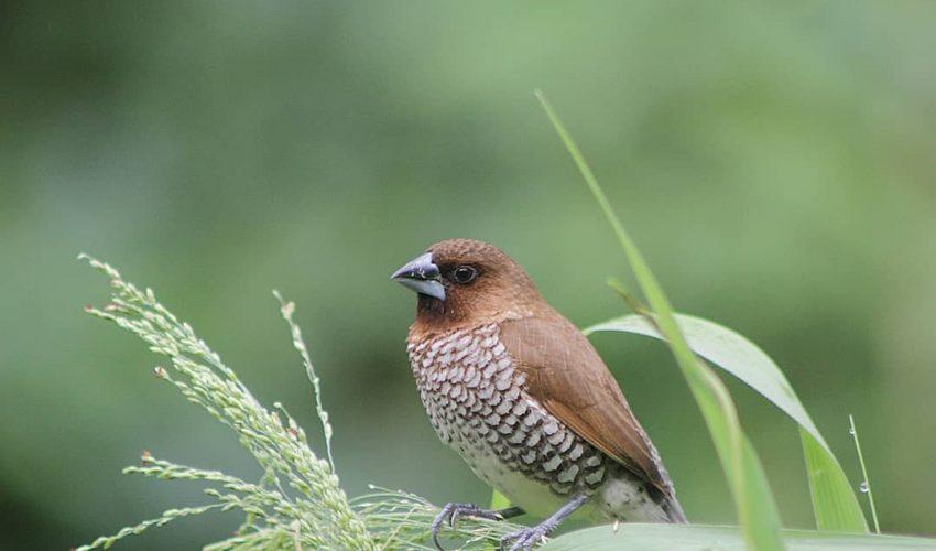 Cara Mengendalikan Hama Burung Yang Tepat