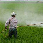Dampak Negatif Pembasmi Hama Pestisida Berlebihan